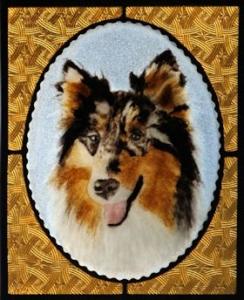 Max the Shetland Sheepdog